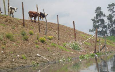 El Río Bogotá: o nos adaptamos o nos vamos